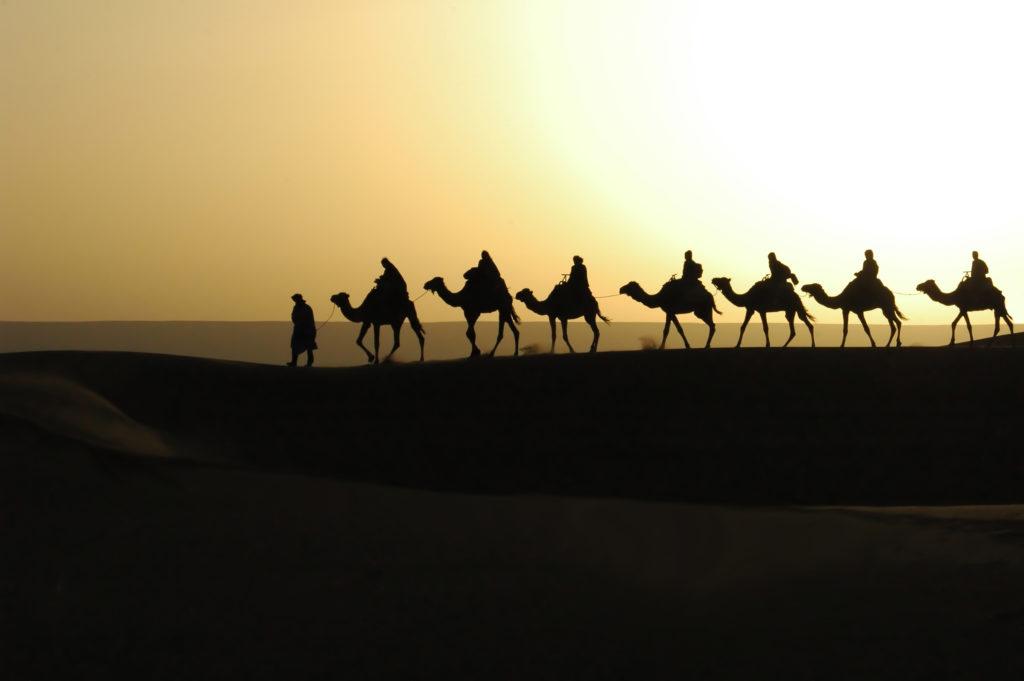 amanecer camellos